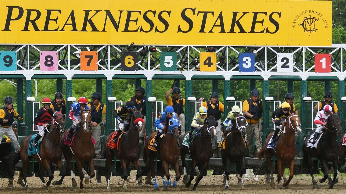 Preakness betting help afl betting odds australia
